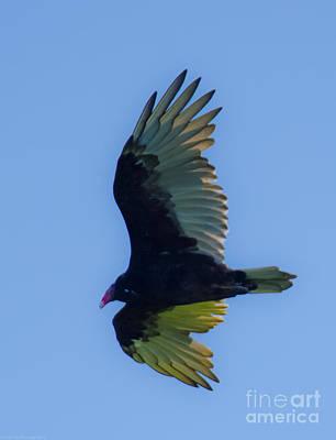 Photograph - Talking Turkey Vulture by Jeff at JSJ Photography