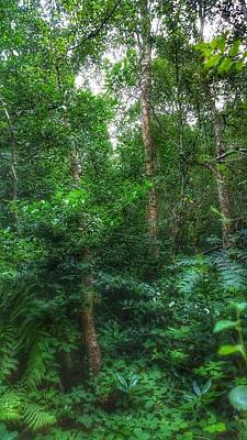 Photograph - Tall And Green by YoursByShores Isabella Shores
