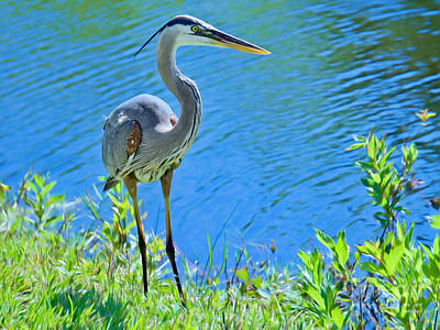 Photograph - Tall And Proud 2 by Judy Kay