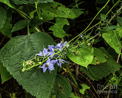 Photograph - Tall Bellflowers by Kathy McClure