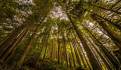 Olympic National Park Photograph - Tall Boys by Kristopher Schoenleber