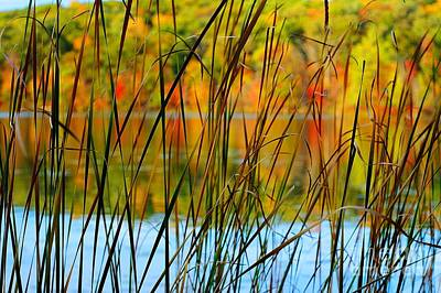 Photograph - Tall Grass Abstract by Randy Pollard