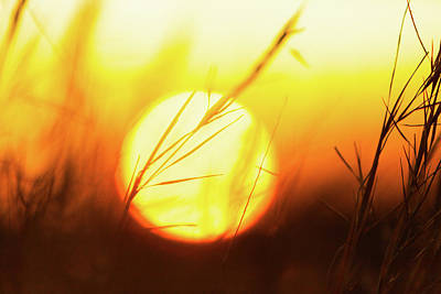 Photograph - Tall Grass And Sunset by Steven Green