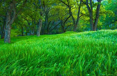 Tall Grass At Twilight Art Print