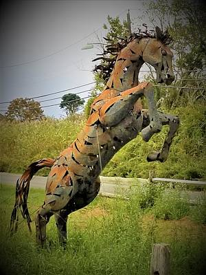 Photograph - Tall Grass Horse 1 by Rob Hans