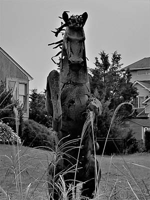 Photograph - Tall Grass Horse B W by Rob Hans