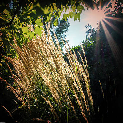 Photograph - Tall Grass In The Afternoon Wind by Mick Anderson