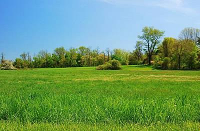 Tall Grass In The Field - Bayonet Farm Art Print