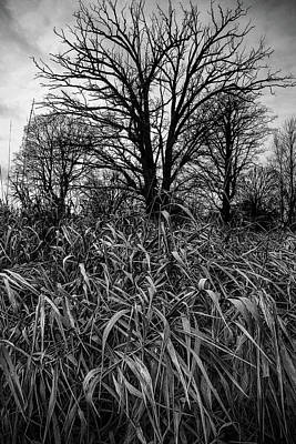 Black And White Photograph - Tall Grass by Joshua Hakin
