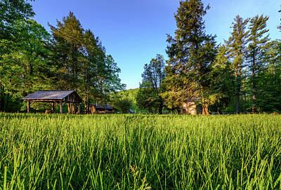 Photograph - Tall Grass by Michael Scott