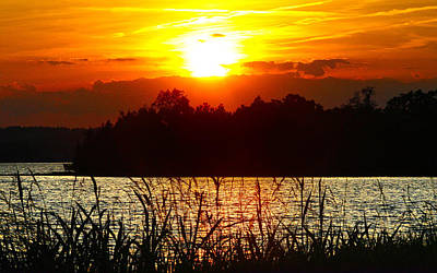 Tall Grass Sunset 2 Smith Mountain Lake Art Print