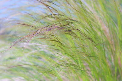 Photograph - Tall Grasses Swaying In The Breeze With Blue Sky In Background by Barbara Rogers Nature Inspired Art Photography