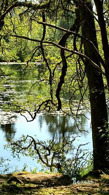 Photograph - Tall Lakeside Reflection by Sadie Reneau