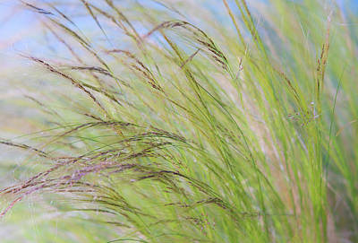 Photograph - Tall Ornamental Grasses Blowing In The Wind by Barbara Rogers Nature Inspired Art Photography