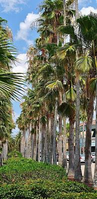 Photograph - Tall Palms Of Venice by John Hintz