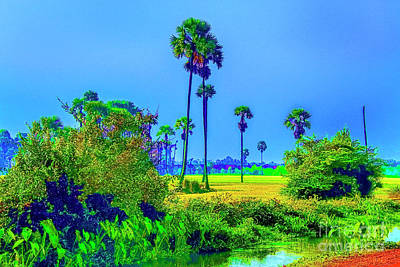 Photograph - Tall Palms by Rick Bragan