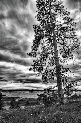 Photograph - Tall Pine On Kamiak Butte by David Patterson