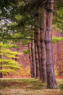 Tall Pines Standing Guard Art Print