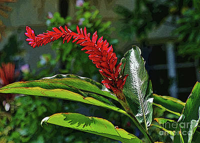 Photograph - Tall Red Ginger by Craig Wood