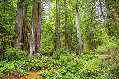 Photograph - Tall Timber by Walt Baker