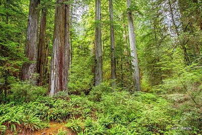 Photograph - Tall Timber by Walt Baker