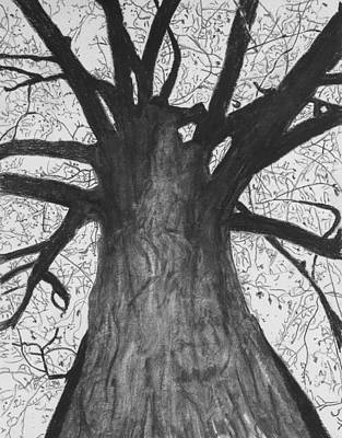 Drawing - Tall Tree by Cathy Jourdan