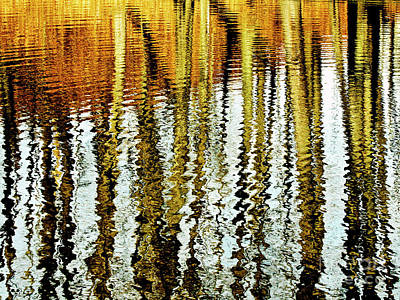 Photograph - Tall Tree Reflections Painted By Nature by Carol F Austin