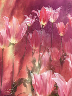 Tall Tulips Art Print