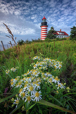 Photograph - Tall White Asters At West Quoddy Head by Rick Berk