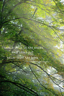 Photograph - Taller Than The Trees by Bill Wakeley