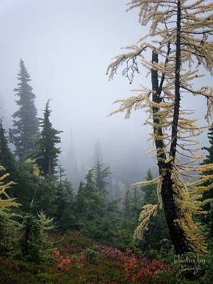 Photograph - Tamarack by Jamie Johnson