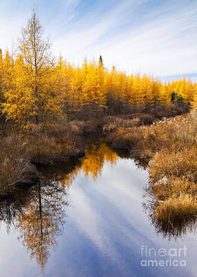 Photograph - Tamarack Landscape by Alan L Graham