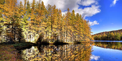 Autumn Landscape Photograph - Tamarack Panorama by David Patterson