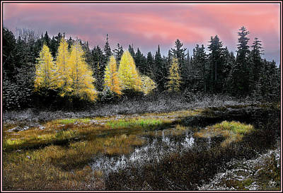 Photograph - Tamarack Sunset Mindscape by Wayne King