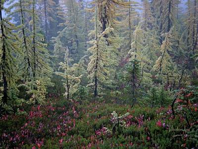 Photograph - Tamaracks And Heather by Jamie Johnson