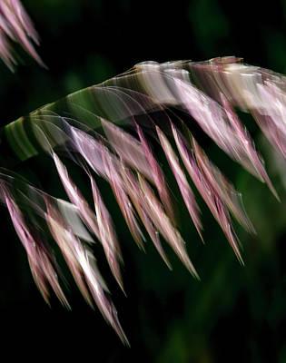 Photograph - Tamarisk Twist by Deborah Hughes