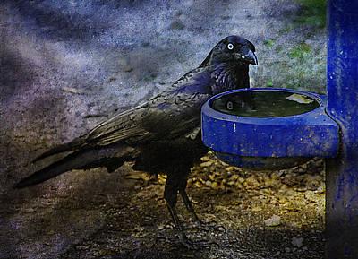 Digital Photograph - Taming Of The Crow by Georgiana Romanovna