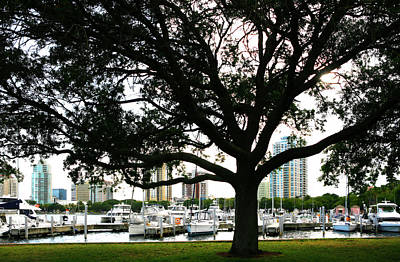 Photograph - Tampa Shoreline And Skyline Through Tree by Marilyn Hunt
