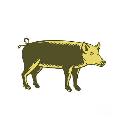 Tamworth Wall Art - Digital Art - Tamworth Pig Side Woodcut by Aloysius Patrimonio