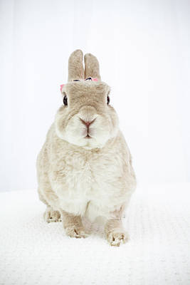 Photograph - Tan Bunny by Jeanette Fellows