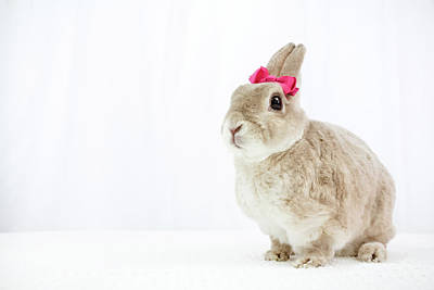 Photograph - Tan Bunny With A Pink Bow by Jeanette Fellows