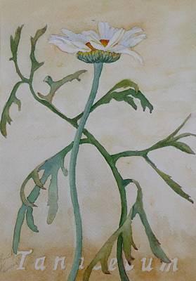 Tanacetum Art Print