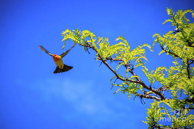 Cute Tree Images Photograph - Tanager Take Off by Robert Bales