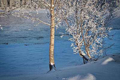 Photograph - Tanana River Bank In Winter by Cathy Mahnke