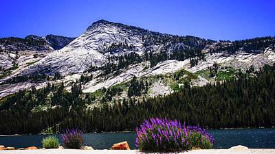 Tanaya Lake Wildflowers Yosemite Art Print