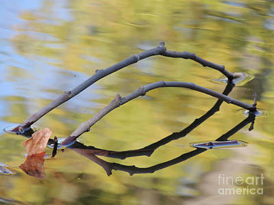 Photograph - Tandem Twigs by Robert Ball
