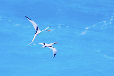 Photograph - Tangential Longtails by Jeff at JSJ Photography