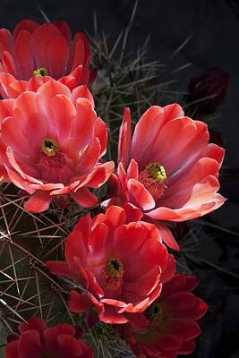 Art Print featuring the photograph Tangerine Cactus Flower by Phyllis Denton