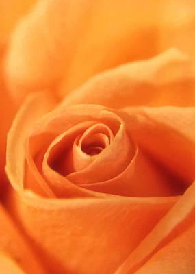 Photograph - Tangerine Cream by Nathan Little
