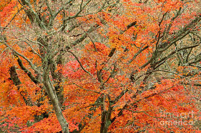 Photograph - Tangerine Forest by Frank Townsley